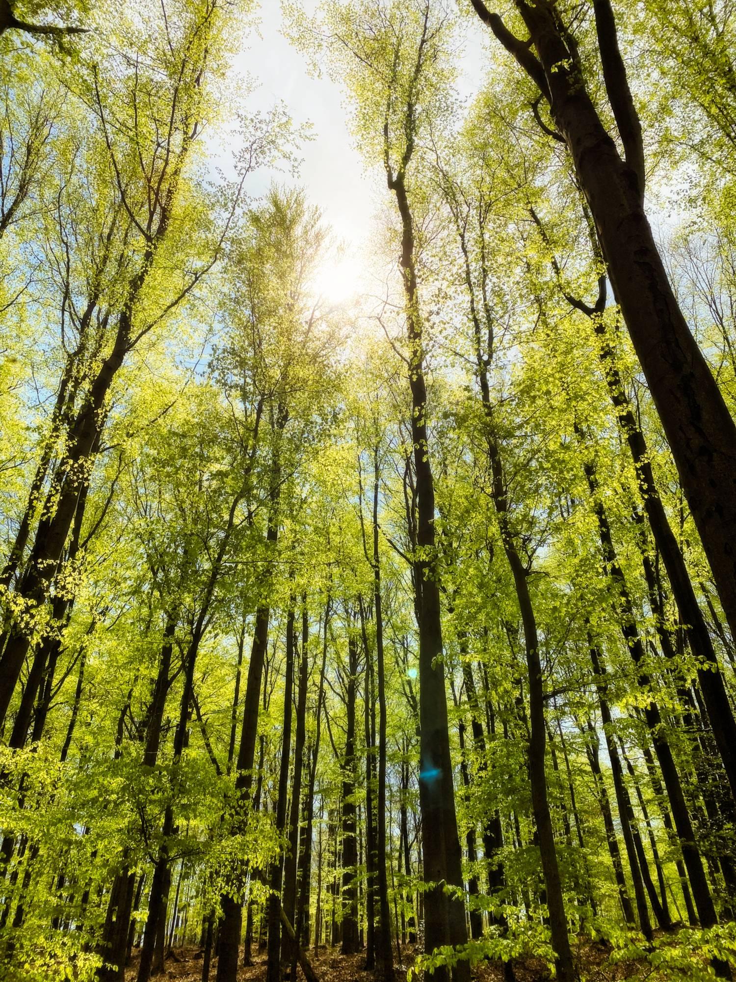 As copas das árvores ThetaHealing
