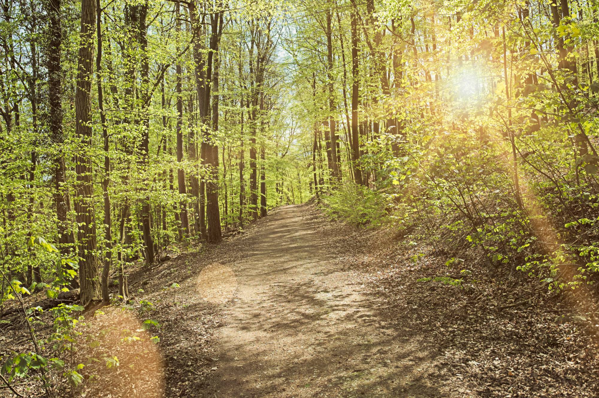 O Caminho da Floresta ThetaHealing